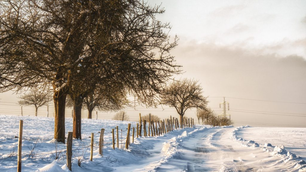 Winter-Solstice-Banner_Garden-Collage_Norbert-Reimer-1-1400x788-1024x576