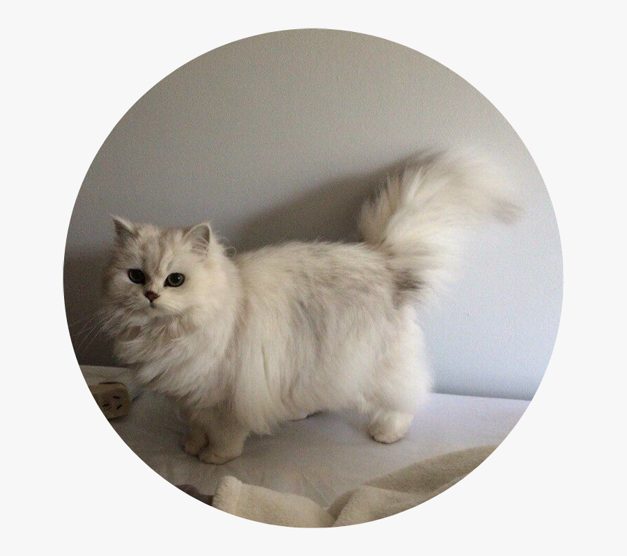 207-2075008_tumblr-aesthetic-cat-kitty-fluffy-cataesthetic-cat-aesthetic