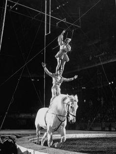212356030717612bf28fc8dfc45d80ed--bareback-riding-show-horses