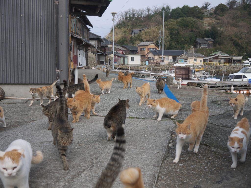 Herding-Cats-1024x768