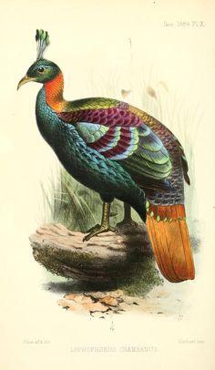 e617bfc1820a44ac3f2989e87e2f432e--bird-prints-paons