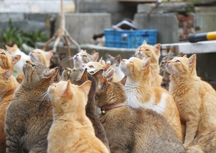 Kocia-wyspa---Aoshima,-Japonia