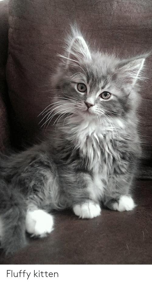 fluffy-kitten-46055680