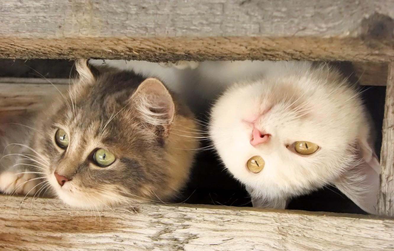 funny-cat-kitten-kitty-cats