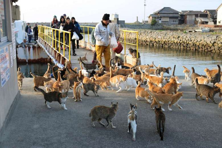 37576536_-_26_02_2016_-_japan-cat-island