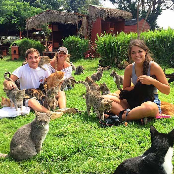 Hawaii-Cats-Play