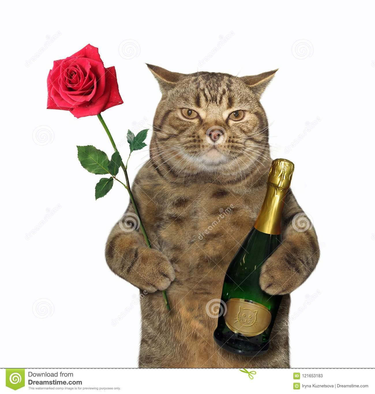 handsome-cat-holds-bottle-sparkling-wine-red-rose-white-background-121653183
