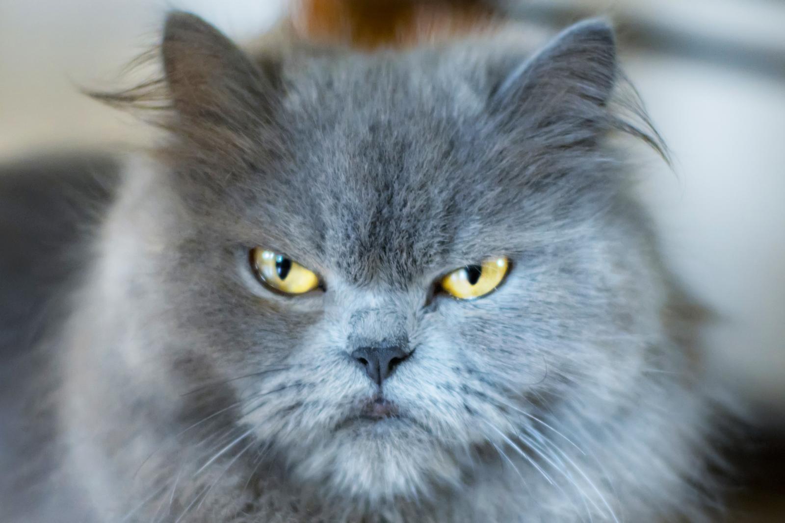 235591-1600x1067-grumpy-cat