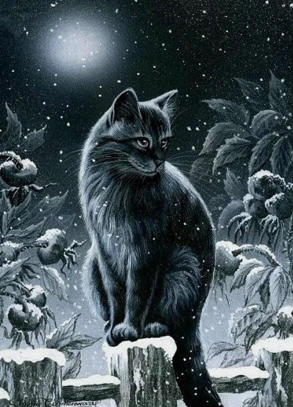 Black_Cat_in_the_Night_588x