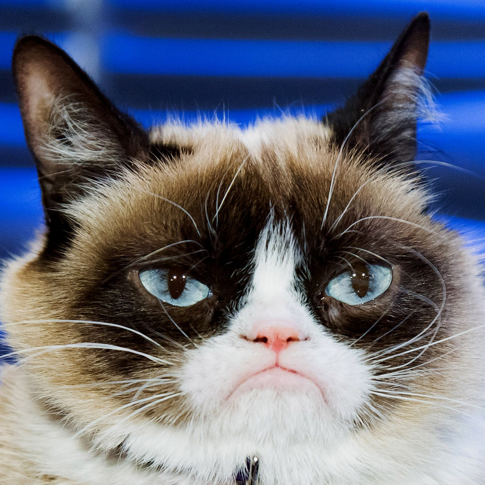 Culture-Grumpy-Cat-487386121