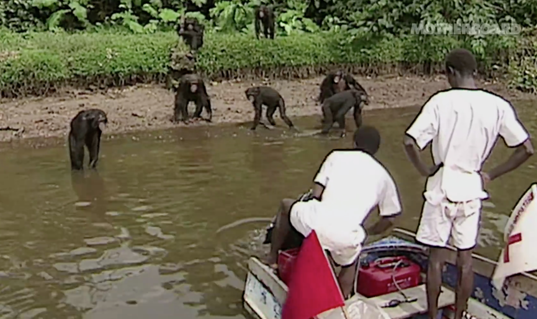 Monkey-Island-chimp-caretakers