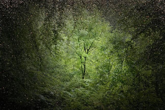 ellie-davies-cosmic-forest-stars-9.jpg.650x0_q70_crop-smart