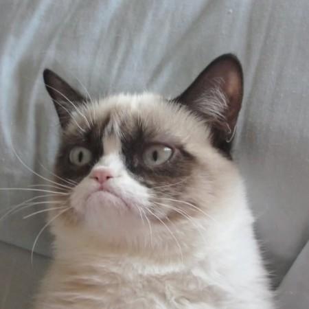 grumpy-cat-copywriting-450x450