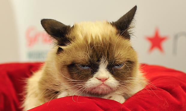 grumpy-cat-getty