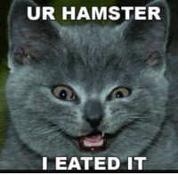 thumb_ur-hamster-i-eated-it-evil-cat-22312481