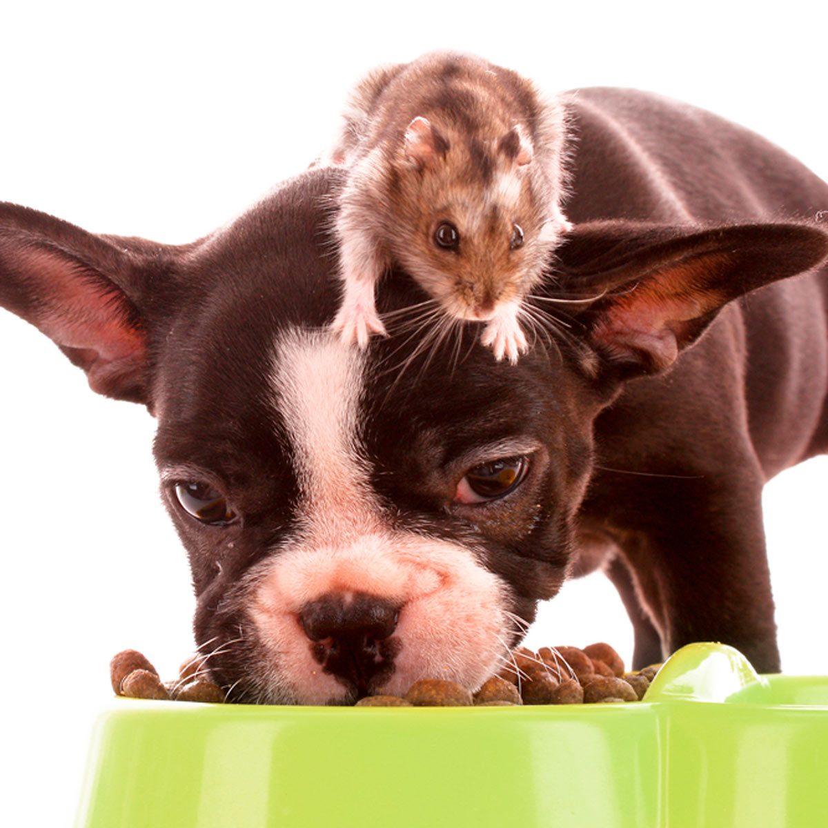 shutterstock_60905122-Dogs