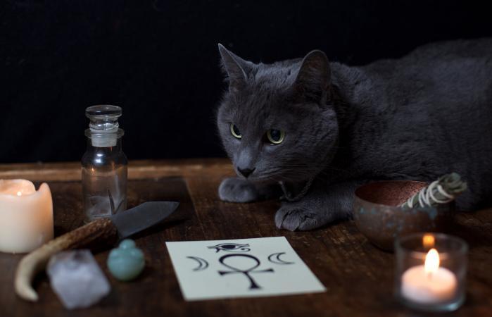 245821-699x450-magical-cat-names