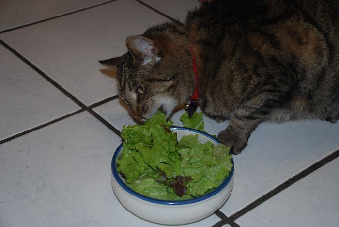 hirams-salad-veggie-salad-diet-light__700